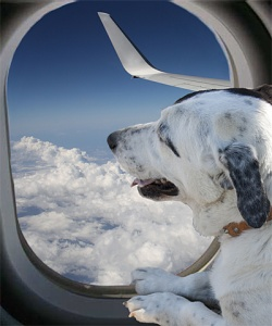 Trasporto aereo cane