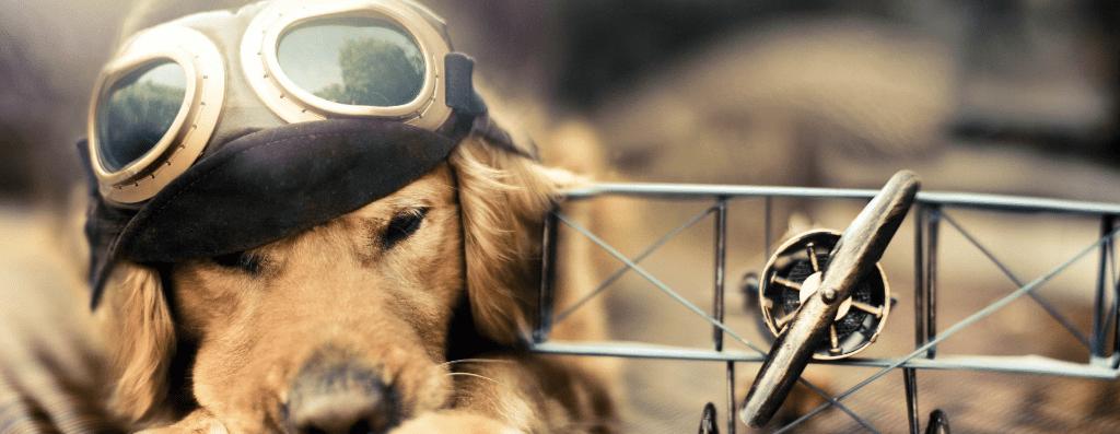 Trasferire animali in aereo? È sicuro!