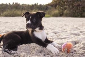 Trasporto Cani All Estero Pratiche E Certificati
