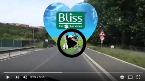 video-blissfulday