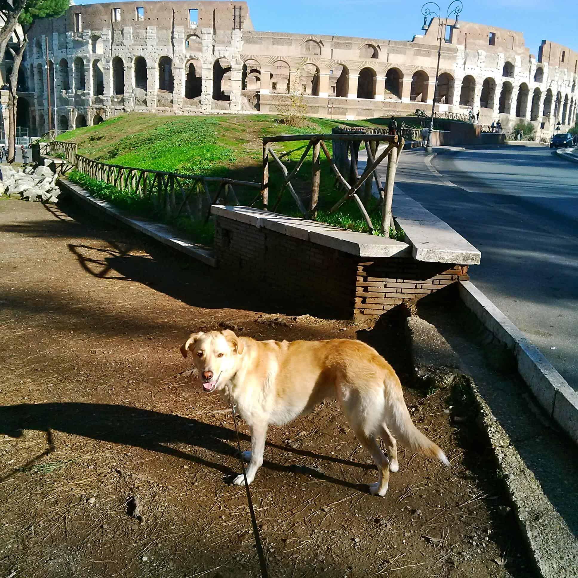 Eta-Rome