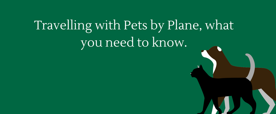 travelling-with-pets-by-plane