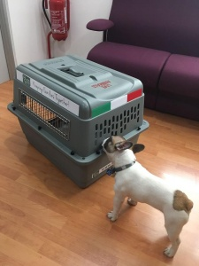 Dog with his Kennel