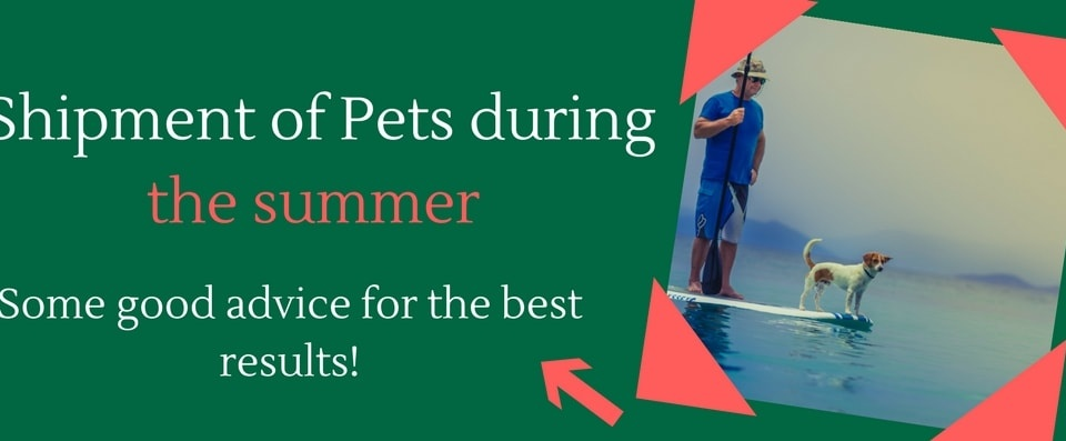 shipment-of-pets-during-the-summer