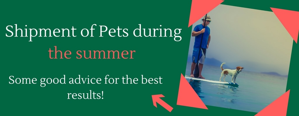 Shipment of pets during the summer – Some good advice for the best results!
