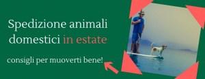 Spedire animali in aereo per vacanze estive? Ecco l'articolo che fa per te!