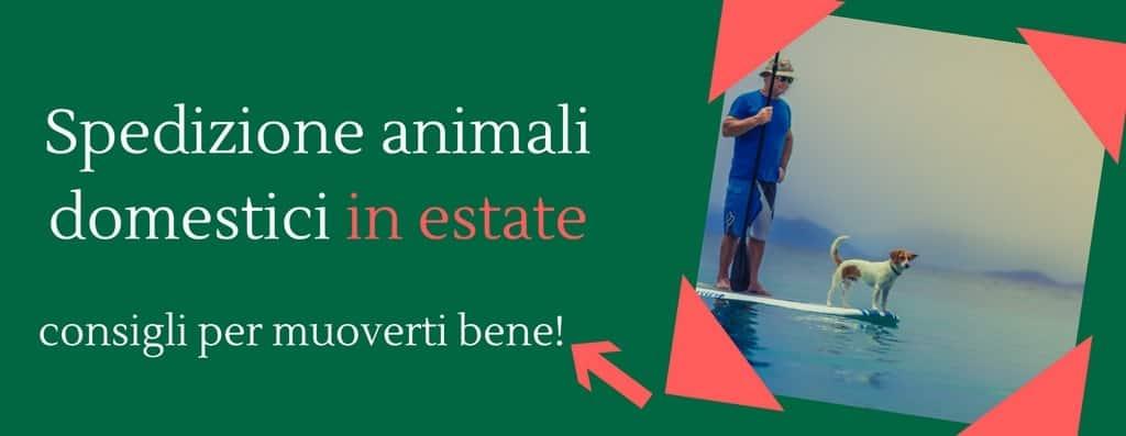 Spedizione animali domestici in estate – Consigli per muoverti bene!