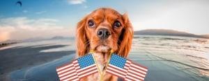 Trasporto cani in America