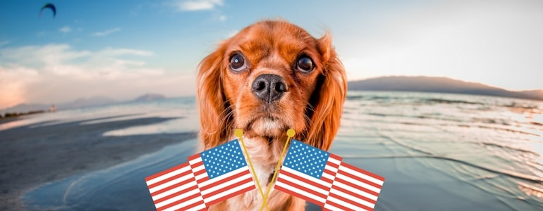 Transporting dogs to America – All the procedures that you need to know