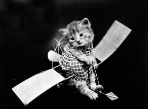 Trasporto gatto
