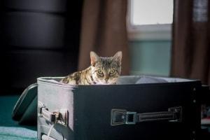 trasporto gatti Canada