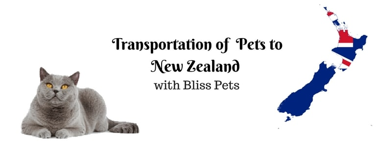 Transportation of  Pets to New Zealand – Bliss Pets