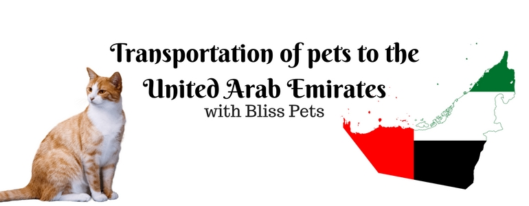 Transportation animals united arab emirates