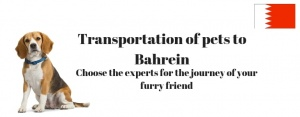 transportation of pet to bahrein