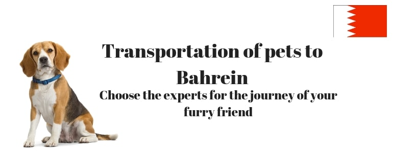 Transportation of pets to Bahrein – Choose the experts for the journey of your furry friend