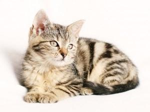 gatto voli con scalo