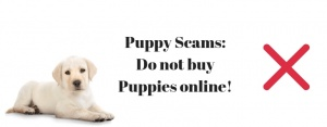 puppy scams