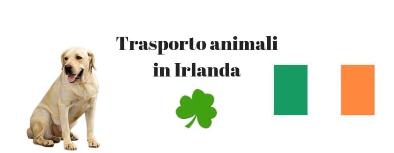 Trasporto animali dall'Italia all'Irlanda