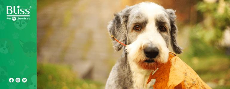 5 consigli per aiutare il tuo pet ad affrontare l'autunno