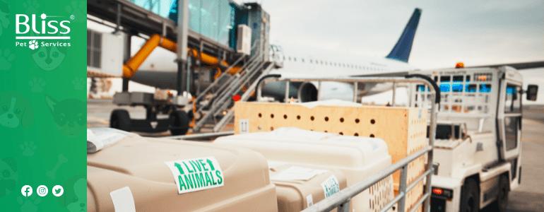 Trasporto di animali in aereo e COVID-19, cosa cambia?